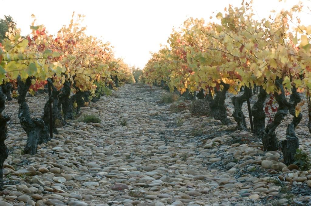 Vignoble Cave Terres d'Avignon
